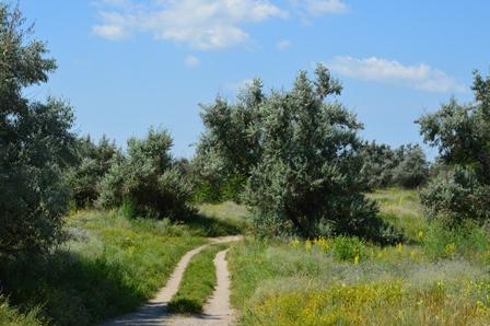 Путь к р.Орель