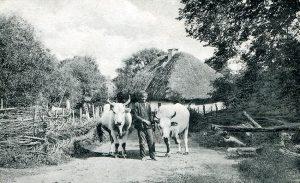 Виды улиц украинского села.Старые фотографии